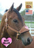 products/Halter_Bronc_Sweetheart_Horse.v2.jpg