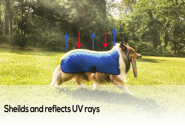 Derby Originals Hydro Cooling Dog Jacket, Reflects Heat & Keeps Dogs Cool for up to 10 Hours