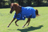 products/Winter_Horse_Turnout_Blanket_1200D_Triple_Gusset_Lifestyle_3_80-8040V2.png
