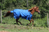 products/Winter_Horse_Turnout_Blanket_1200D_Triple_Gusset_Lifestyle_4_80-8040V2.png