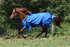 products/Winter_Horse_Turnout_Blanket_1200D_Triple_Gusset_Lifestyle_5_80-8040V2.png