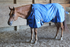 products/Winter_Horse_Turnout_Blanket_1200D_Triple_Gusset_Lifestyle_80-8040V2.png