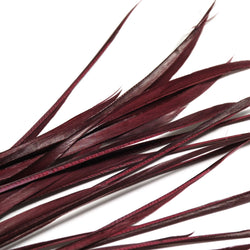 Biot Feather - Aubergine (10cm x 15cm)