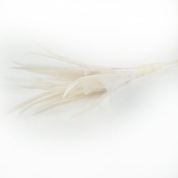 ivory biot and hackle feathers