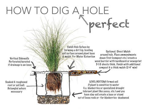 How to dig a perfect hole for planting your California Wild Plants