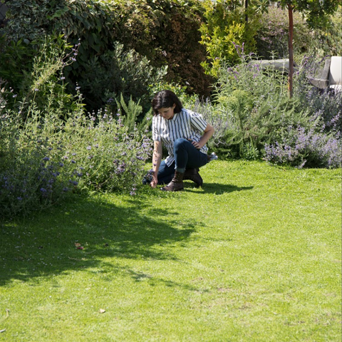 California's greatest lawn alternative is here. now.