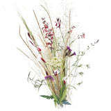 Grassland Ghost Small Plant Pack