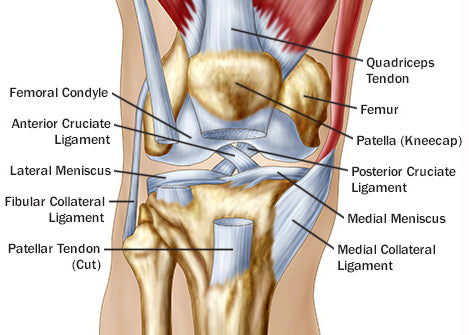 GUIDE: Knee Injuries in BJJ – Fighters Market