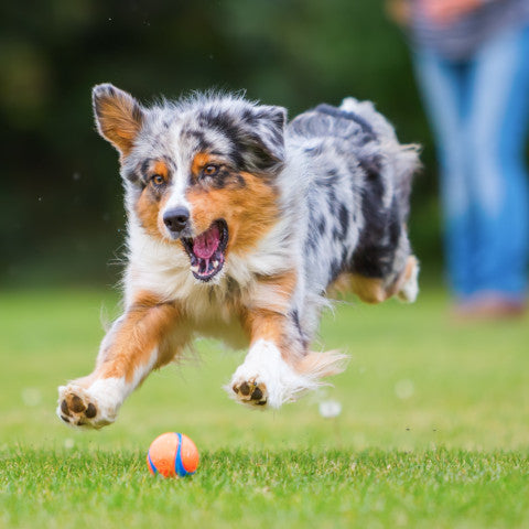 Active dogs, outdoor dog toys