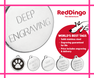 Red Dingo Pet Tag** HIGHLY RECOMMENDED!