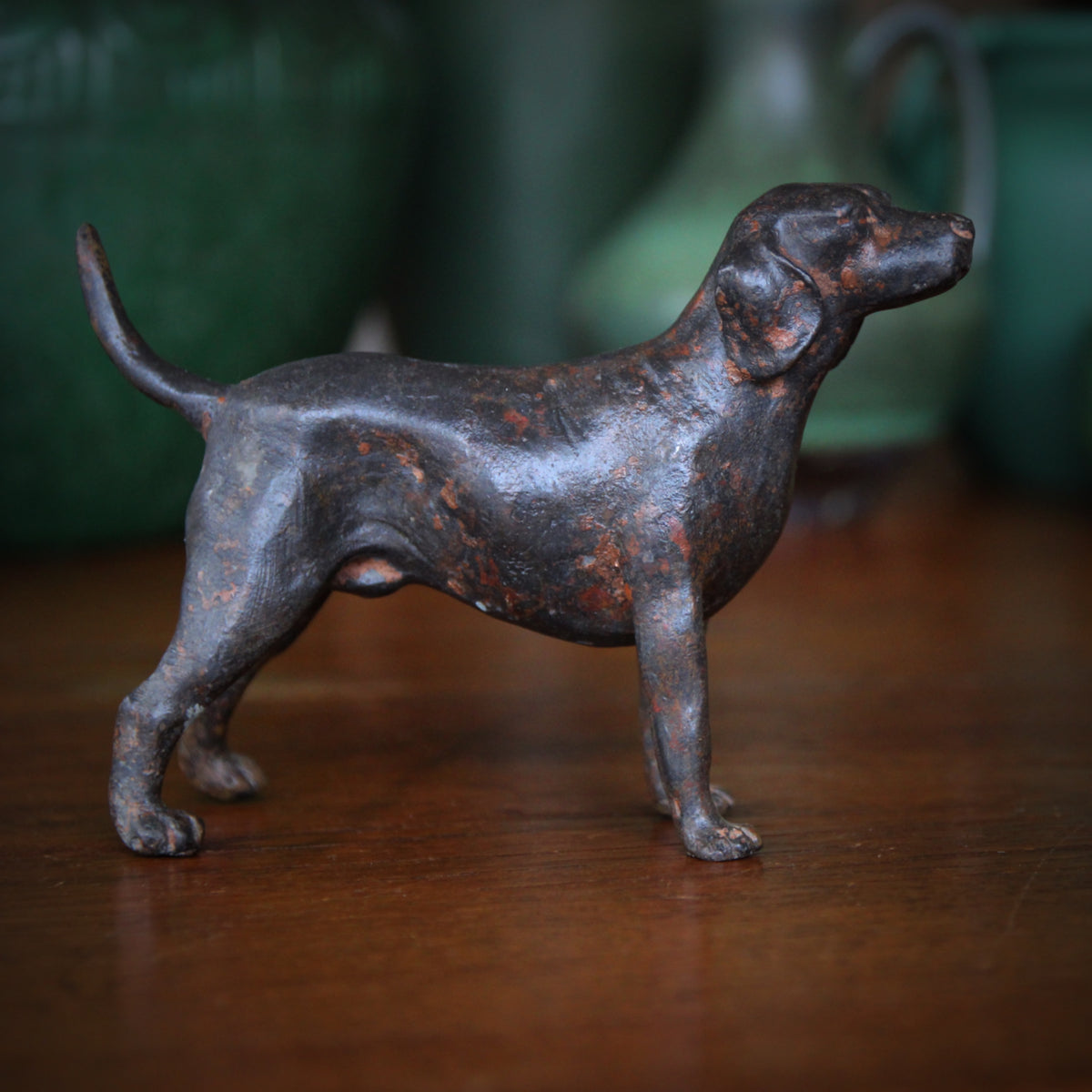 Bronzed Bird Dog
