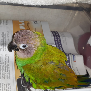 Rickie's Parrot Rescue and Sanctuary of South Florida