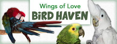 Wings of Love Bird Haven