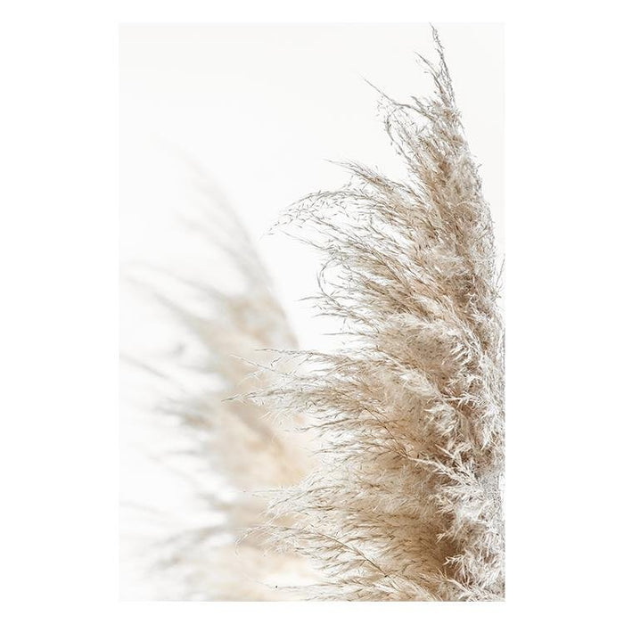 Pampas Grass I - Winston and Finch
