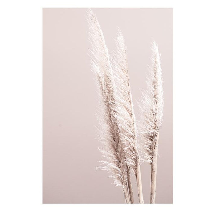 Pampas on Pink - Winston and Finch