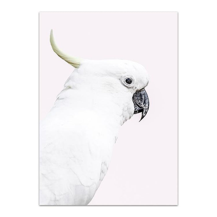 White Cockatoo - Winston and Finch