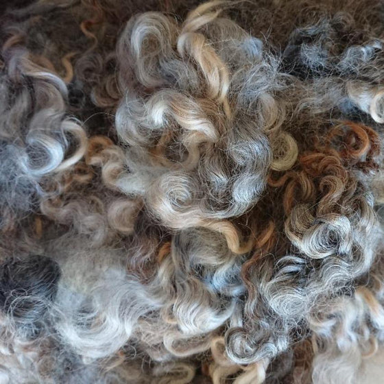Natural Coloured Leicester Curls - Highland Felting and Fibre Supplies