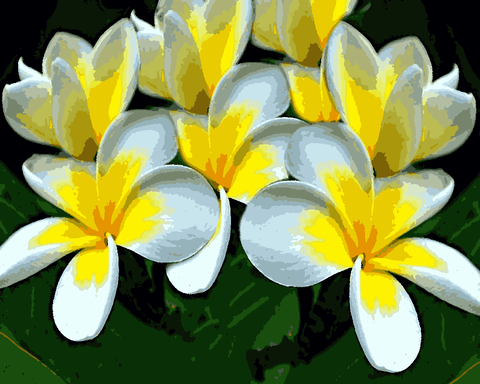 Flowers Collection (129) - White Plumeria - Van-Go Paint-By-Number Kit