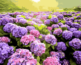Flowers Collection (149) - Hydrangea - Van-Go Paint-By-Number Kit
