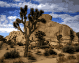 Amazing Places (242) - Joshua Tree National Park, California - Van-Go Paint-By-Number Kit