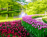Amazing Places (250) - Keukenhof Gardens, Lisse, Netherlands - Van-Go Paint-By-Number Kit