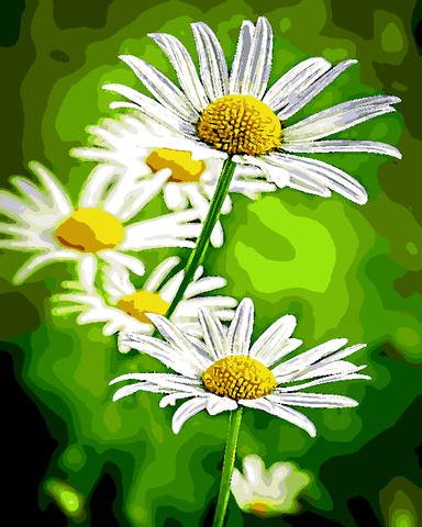 Flowers Collection (25) - Daisies - Van-Go Paint-By-Number Kit