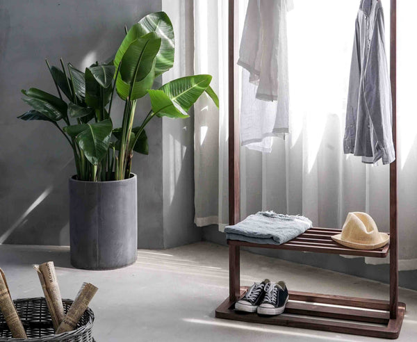 clothes hanger next to plant