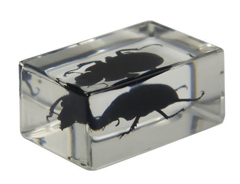 3D Bug Specimen Kit #1