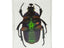 3D Bug Specimen Kit #2