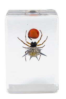 3D Bug Specimen Kit #4