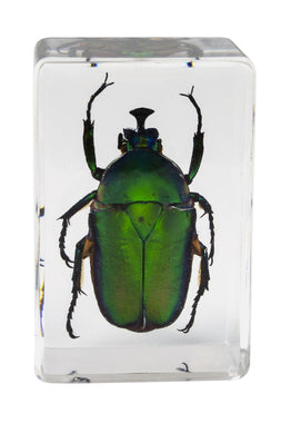 3D Bug Specimen Kit #5
