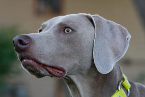Why this Weim?