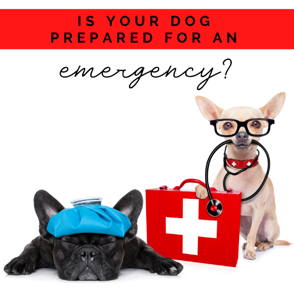 What's in Our Dog Emergency Kit?