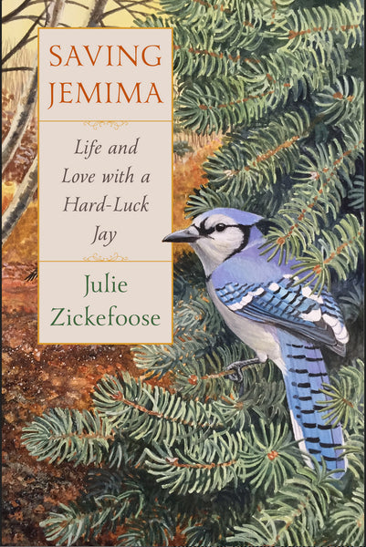 Order Julie Zickefoose's latest book, Saving Jemima: Life and Love with a Hard-Luck Jay at Redstart Birding.