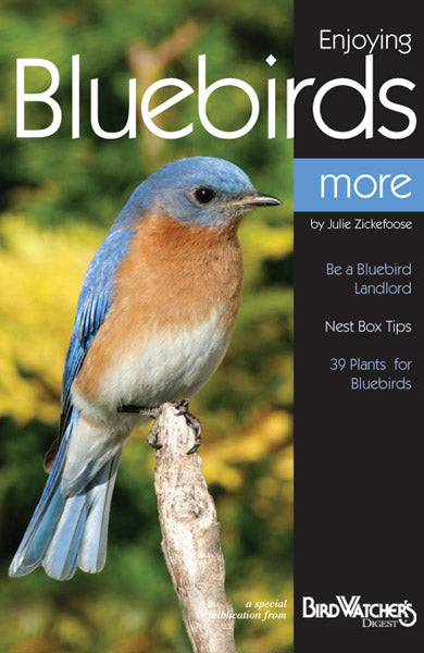 Digital Download: Enjoying Bluebirds More