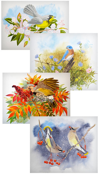 Four Seasons of Birds Notecards