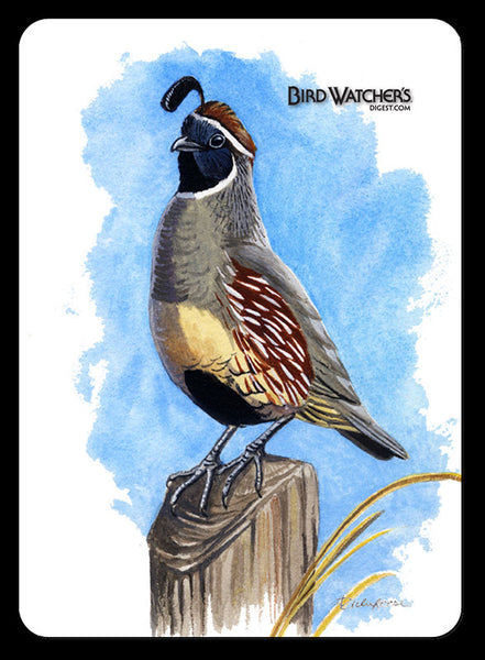 Gambling Quail Playing Cards