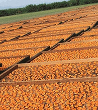 Dried Blenheim Apricots from B&R Farms