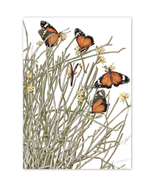'Caustic Bush & Wanderers Butterflies' Blank Card
