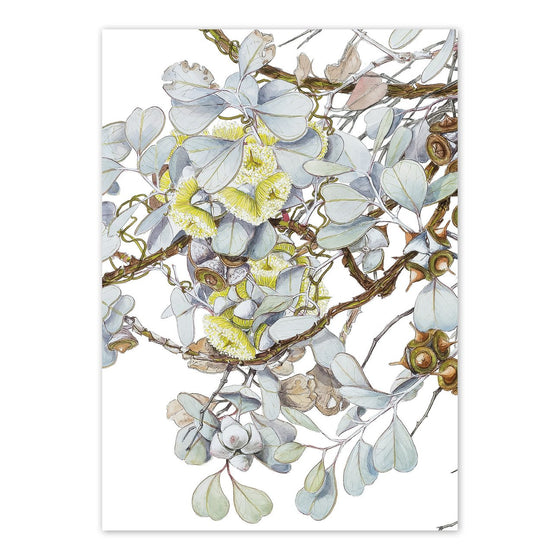 'Eucalyptus Orbifolia, Round-leaved Mallee' Blank Card