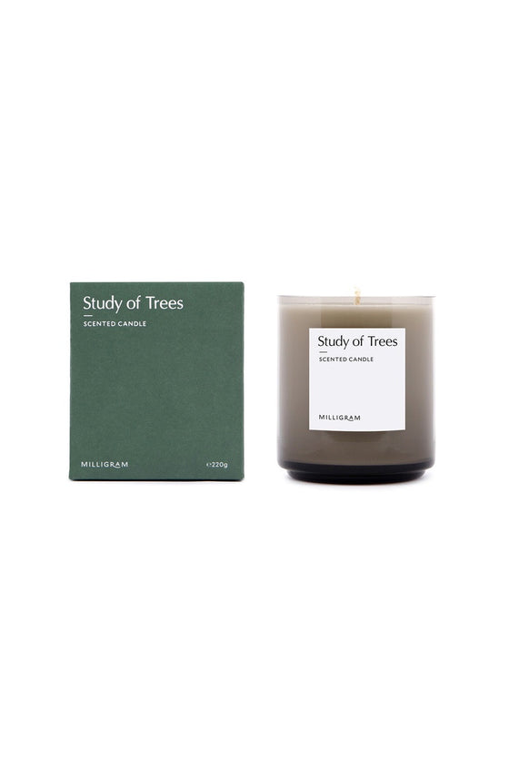 'Study of Trees' Sensory Boxed Candle