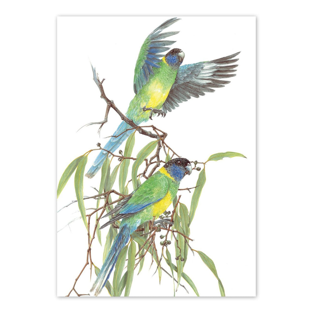 Load image into Gallery viewer, 'Barnardius Zonarius, Port Lincoln Parrot' Blank Card