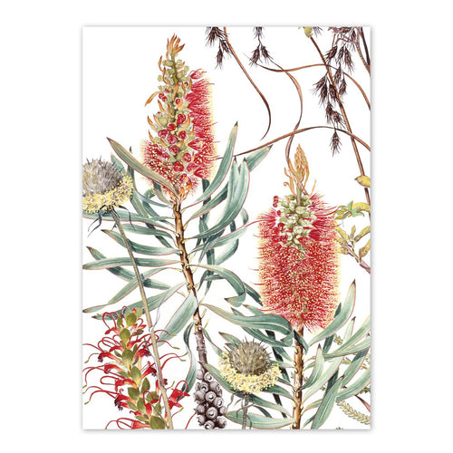 'Wildflowers of the Albany Region I' Greeting Card