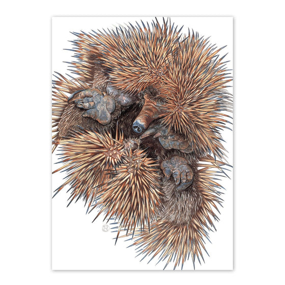 'Echidna' Greeting Card