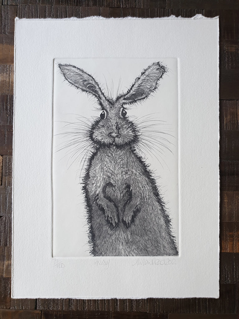 Alison Read 'Nosy' original etching