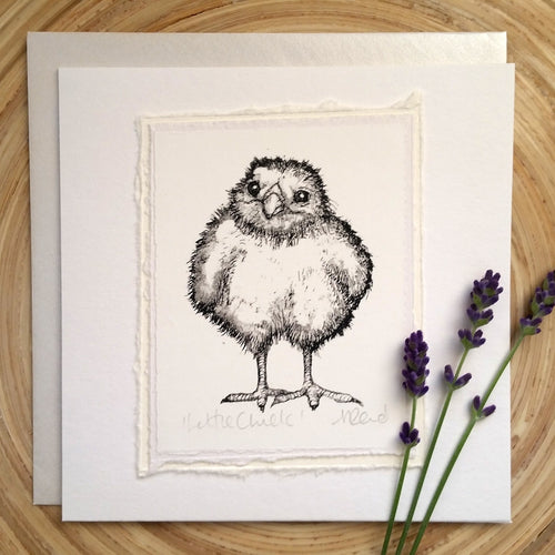 Little Chick - Greetings Card