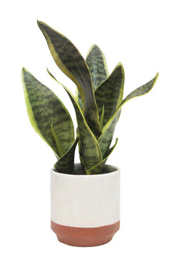 Sansevieria Faux Plant with White Pot 31x10cm