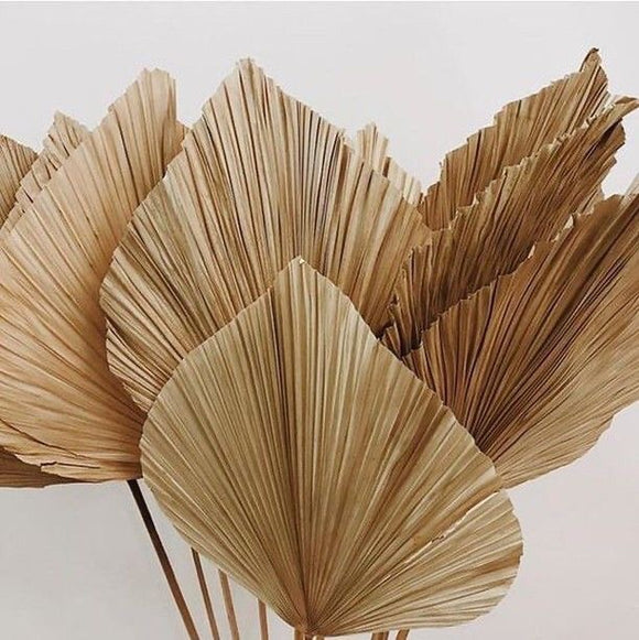 Dried Fan Palms (set of 3)
