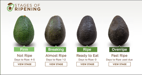 Avocado ripening