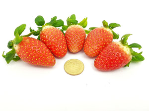 Korean Strawberry Medium 250g
